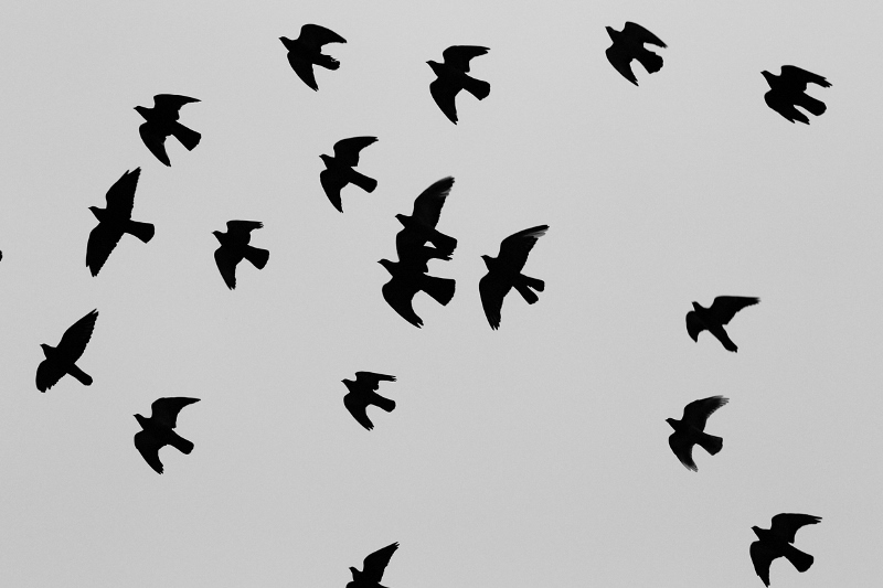 Gandurile unui mort - Lucian Blaga